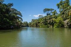 Отключение реки в джунглях стоковое изображение rf