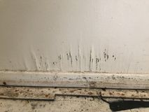 Отлейте расти в форму на стене после flooding harvey урагана Стоковое Изображение RF