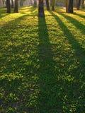 отливка после полудня затеняет солнце Стоковая Фотография RF
