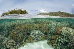 Отмелые кораллы в радже Ampat Стоковые Изображения RF