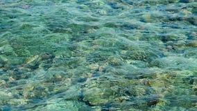 Отмелый риф с кораллами сток-видео