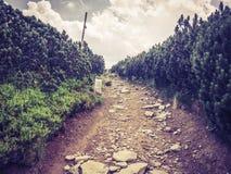 Отмечать на пути горы стоковое фото
