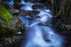 Отмелое река в лесе в Осло Стоковая Фотография