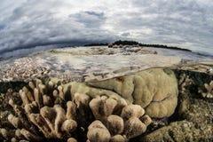 Отмелые коралловый риф и облака Стоковое Изображение RF