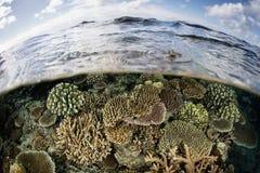 Отмелый коралловый риф в Фиджи Стоковые Фотографии RF