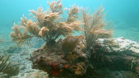 Отмелый риф в пляже Pompano, FL Стоковое фото RF