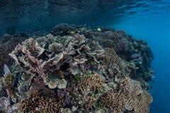 Отмелый Тихий океан риф 2 Стоковое фото RF