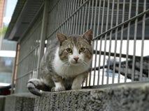 Относят кот, который Стоковое Изображение
