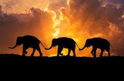 Отношение слонов силуэта при кабель семьи владением хобота идя совместно на заход солнца иллюстрация штока