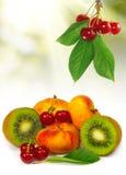 отображайте много крупный план плодоовощ стоковые фото
