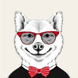 Отображайте собака inu akita портрета в cravat и с стеклами также вектор иллюстрации притяжки corel Стоковая Фотография RF