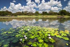 лотос на озере стоковое фото