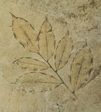 Отпечаток листья на цементе справляется Стоковые Фото