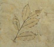 Отпечаток листья на цементе справляется Стоковая Фотография