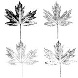 Отпечаток кленовых листов Стоковые Изображения
