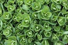 отпочковывает зеленый цвет травы новый Стоковая Фотография RF