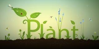 Отправьте СМС завод писем и зеленый росток весны с корнями и красным ladybug в почве, надписью сада лета, Стоковые Изображения