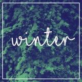 Отправьте СМС зима на предпосылке снежных деревьев Стоковое Фото