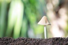 Отравление гриба растя на земле Стоковое Фото