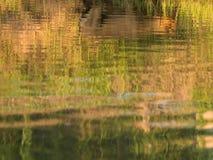 Отражает собаку в пруде Стоковая Фотография
