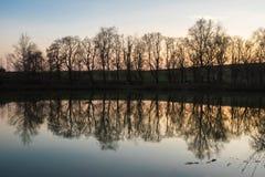 Отражать деревьев которые, который выросли близко пруд на заходе солнца стоковое фото rf