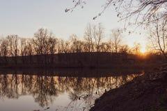 Отражать деревьев которые, который выросли близко пруд на заходе солнца стоковая фотография rf
