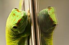 отражать geko стеклянный зеленый красный Стоковые Изображения RF