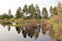 Отражая пейзаж стоковое изображение rf