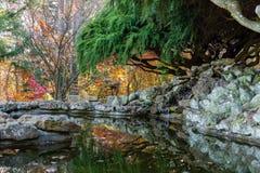 Отражая пруд сада Стоковая Фотография