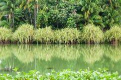Отражение банка воды Стоковое Изображение RF
