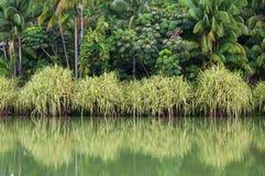 Отражение банка воды Стоковые Изображения