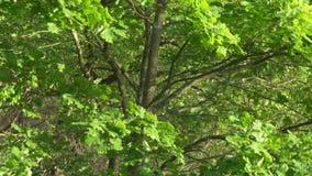 Отражение блеска воды в кроне дерева акции видеоматериалы