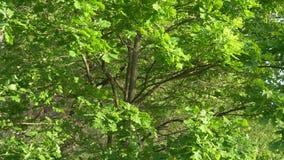 Отражение блеска воды в кроне дерева сток-видео