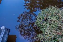 Отражение ветвей Стоковые Фотографии RF