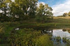 Отражение вечера в пруде Стоковые Изображения RF