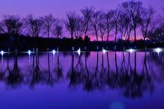 Отражение воды деревьев Стоковые Изображения