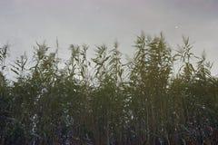 Отражение воды тростников болота и небольших рыб стоковые изображения