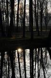 Отражение воды деревьев Стоковые Фото