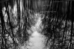 Отражение воды деревьев Стоковые Фотографии RF