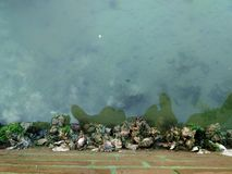 Отражение воды Стоковое Изображение RF