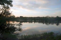 Отражение в воде кустов и деревьев стоковая фотография