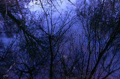 Отражение в выравниваться ветвей дерева озера стоковые изображения
