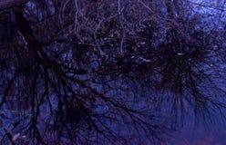 Отражение в выравниваться ветвей дерева озера стоковое изображение rf