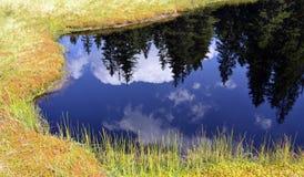 Отражение в затишье, открытое море елей озера горы стоковые изображения rf