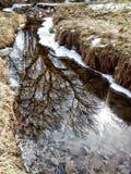 Отражение в местном парке Стоковые Фото