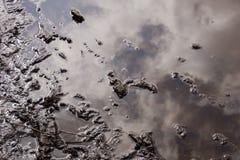 Отражение в лужице Стоковое Фото