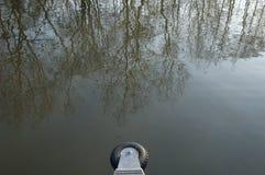 Отражение в этом второпях мире Стоковое Изображение RF