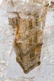 Отражение в Duomo Il лужицы, Флоренсе Стоковые Изображения