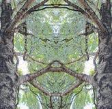 Отражение горизонтально Береза и свои ветви Лето полдень стоковое изображение rf