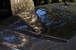 Отражение дерева березы в стекле зада автомобиля Стоковое Изображение RF